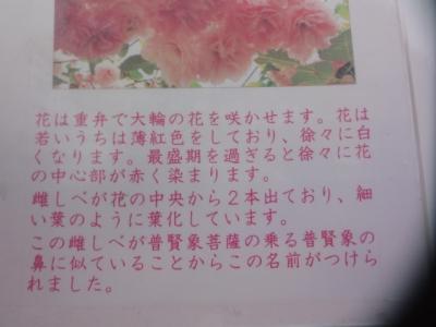 桜・牡蠣祭り 019