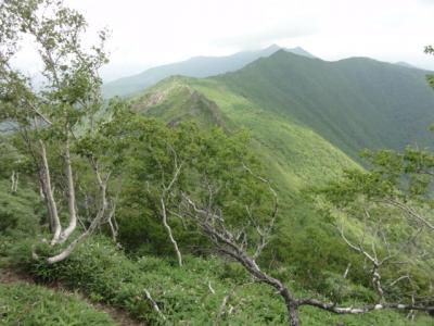 伏美岳・アポイ岳 187