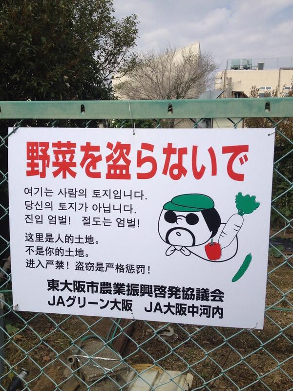 韓国人 中国人 野菜泥棒