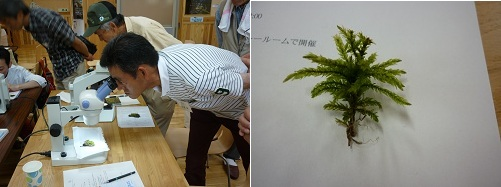towadako_15-1.jpg