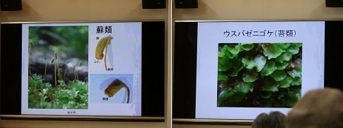 towadako_6-1.jpg