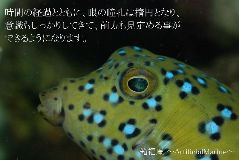 DSC_1666.jpg