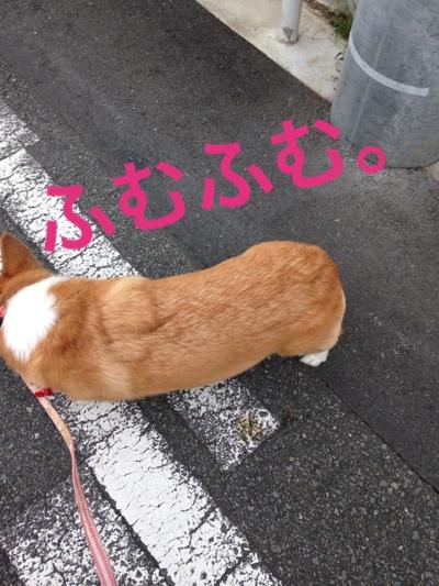 fc2blog_20140908101548df6.jpg