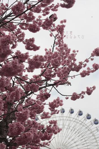 IMG_9716_edited-1のコピー