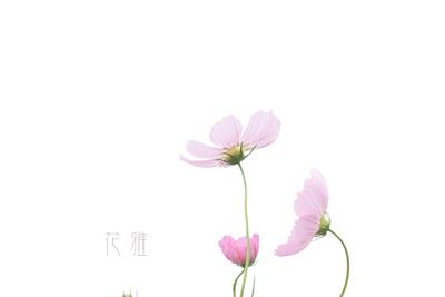 IMG_1790_edited-1のコピー