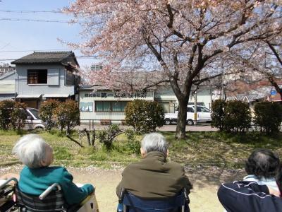 桜2 (1)