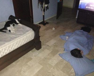 人間と猫の正しい関係