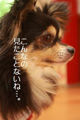 IMG_6131_20140527215300334.jpg