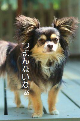 IMG_7586.jpg