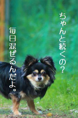 IMG_9039_20140629233319c14.jpg
