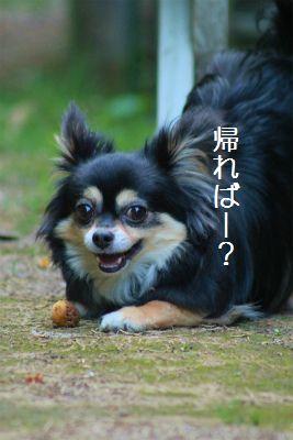IMG_9075.jpg
