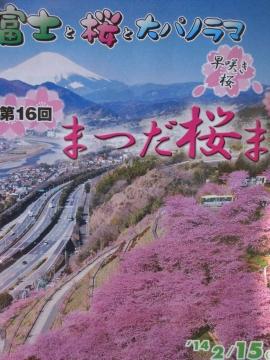 DSCN9921 河津桜