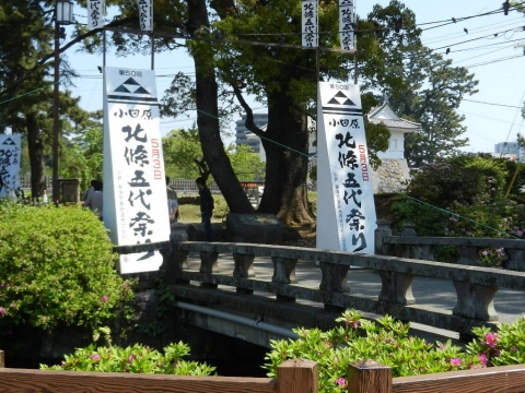 DSCN9809 小田原城 藤