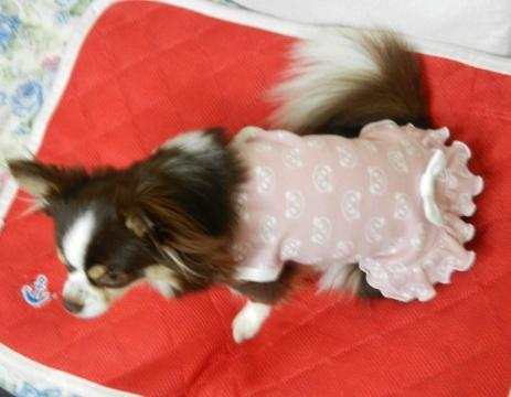 DSCN9769 パンダ洋服