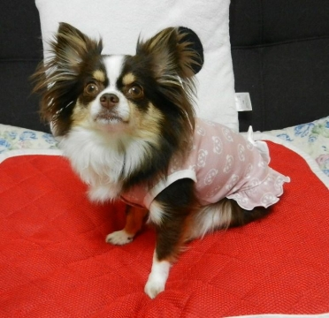 DSCN9768 パンダ洋服
