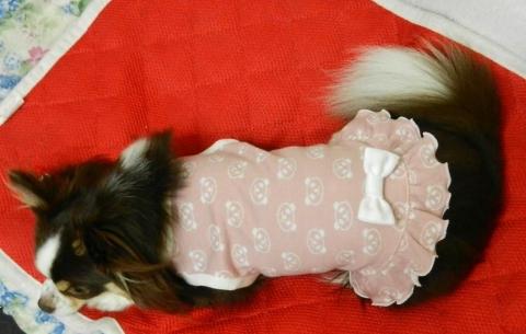 DSCN9770 パンダ洋服