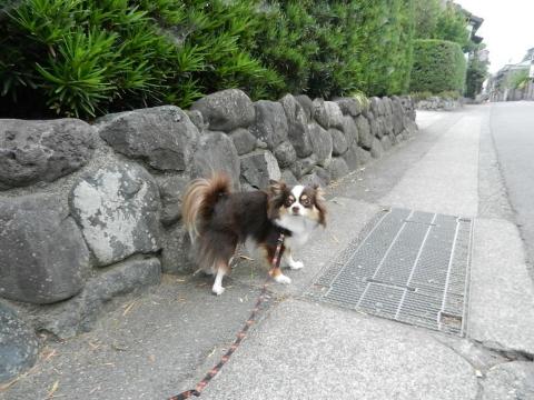 DSCN9886 お散歩