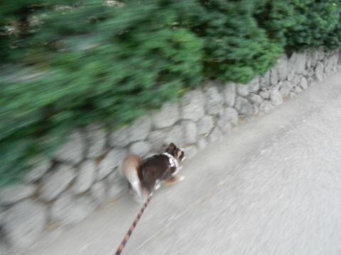 DSCN9888 お散歩