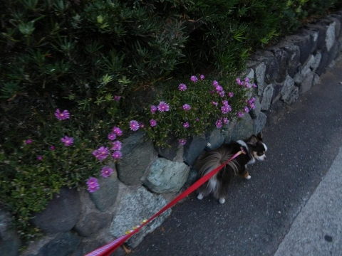 DSCN9834  お散歩822