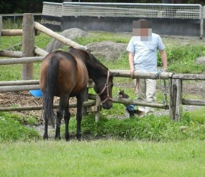 DSCN0117 ロビン馬 2