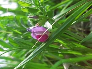 ロウソク瞑想 イメージの力を 鍼灸(はりきゅう)治療院 東京都葛飾区東新小岩 新小岩 鍼灸