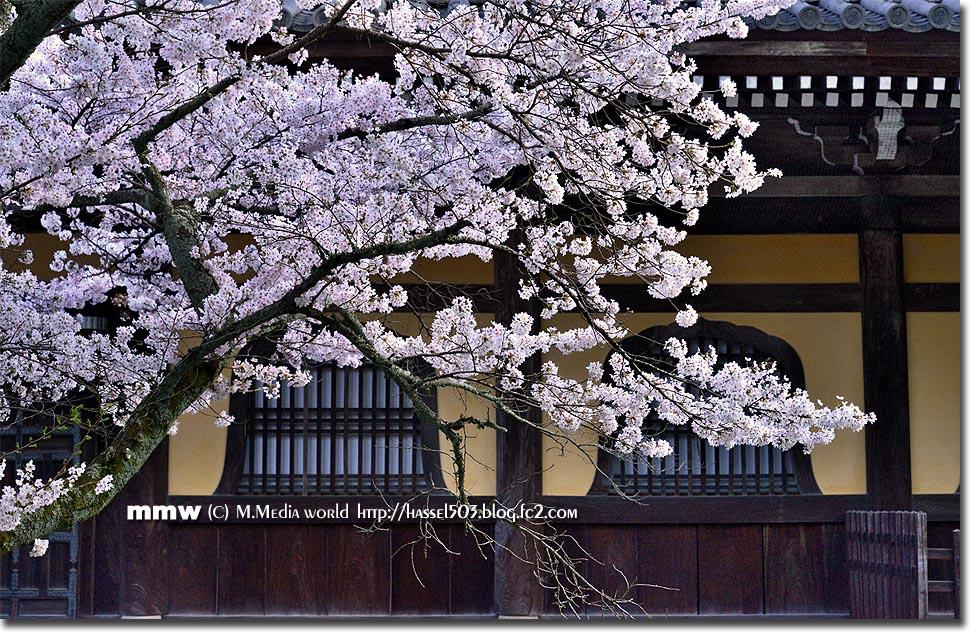 kyoto_s03.jpg