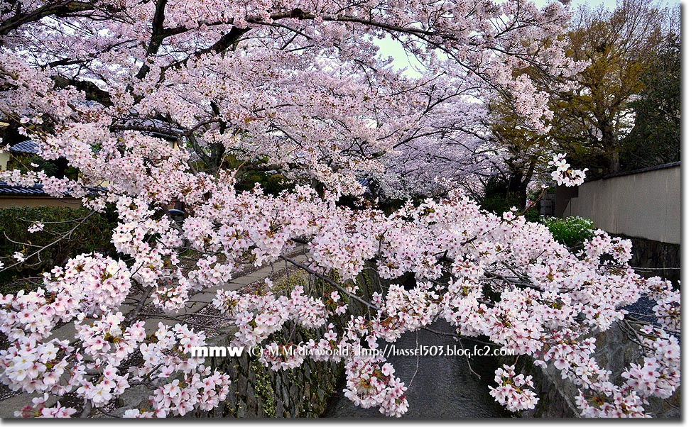 kyoto_s04.jpg