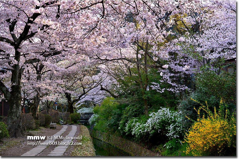 kyoto_s05.jpg