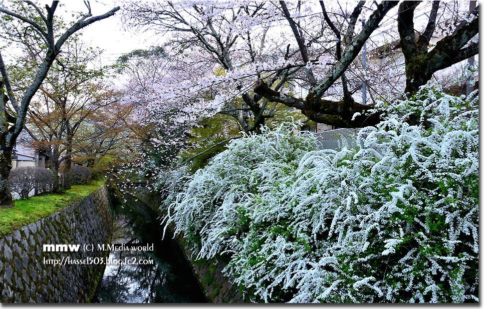 kyoto_s06.jpg