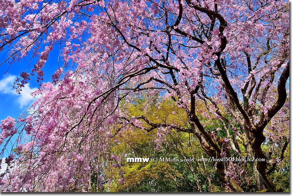kyoto_s22.jpg
