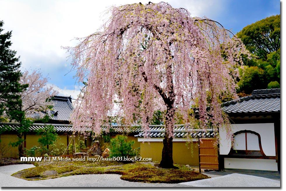 kyoto_s24.jpg