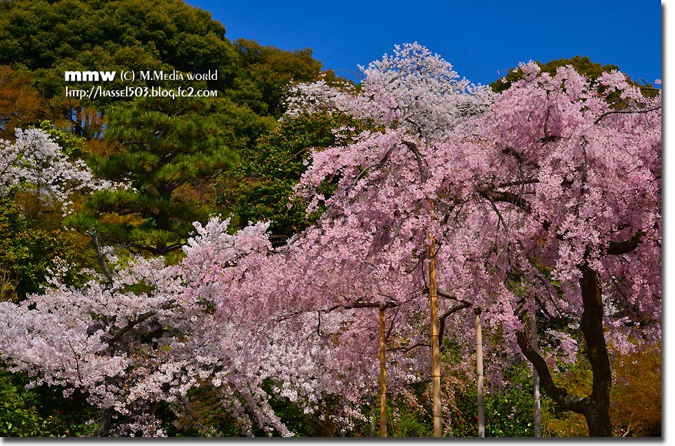 kyoto_s25.jpg