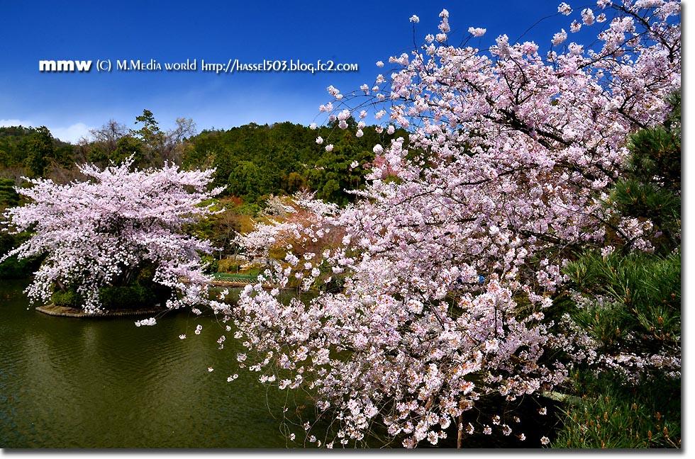 kyoto_s27.jpg