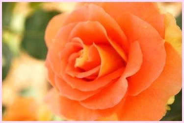 rose140516-2.jpg