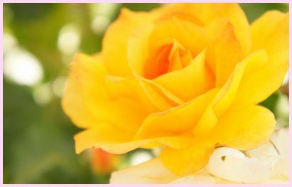 rose140517-2.jpg