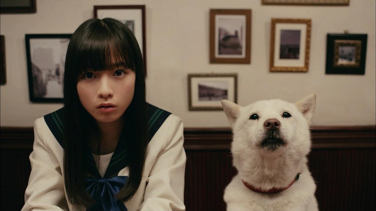 ソフトバンク新CMにゲスト出演した橋本環奈とお父さん犬