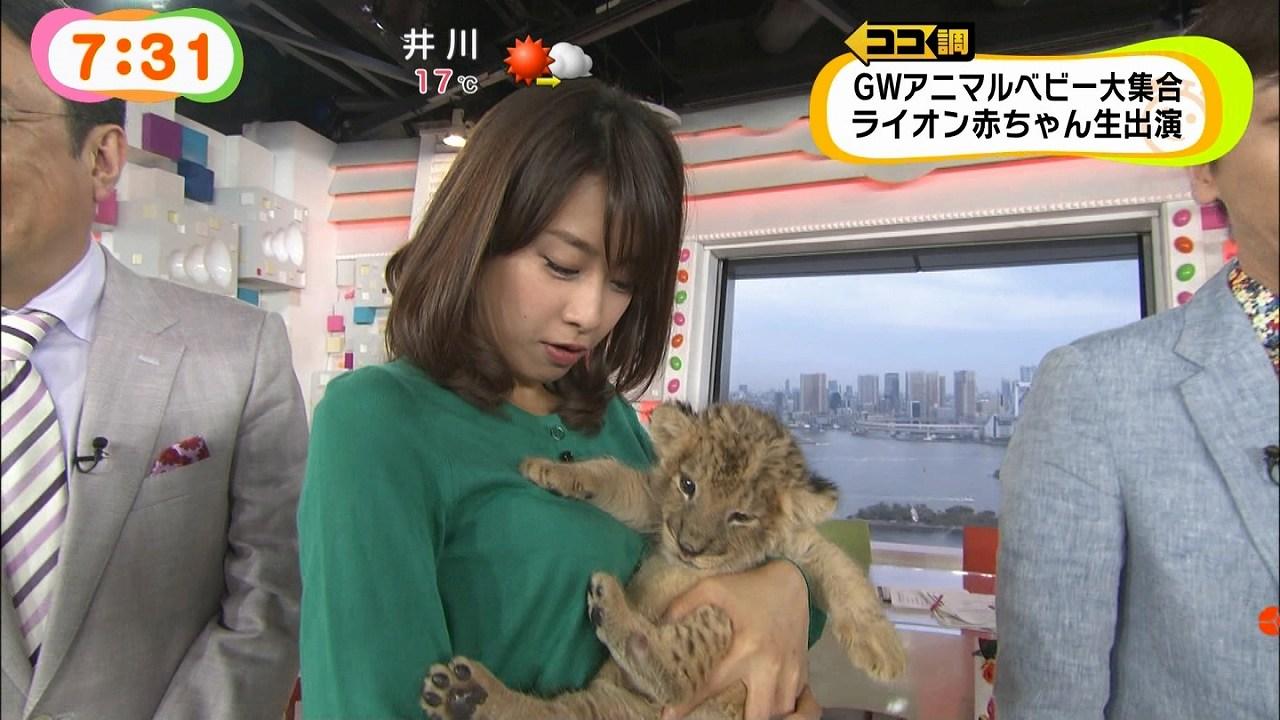 めざましテレビで加藤綾子アナがライオンの赤ちゃんに胸を触られる