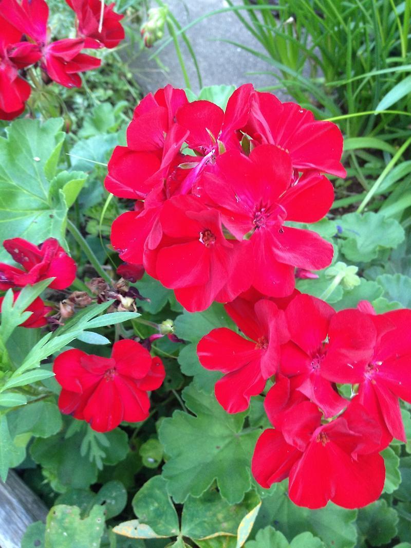 加藤茶のブログ画像 花