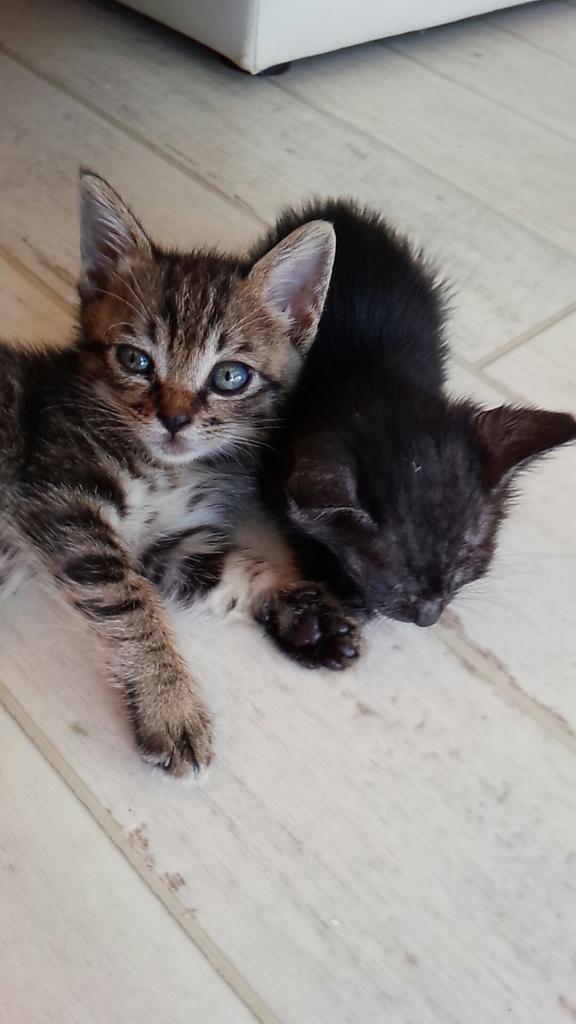 保健所に連れていくとツイートされた野良猫、中川翔子が晒す