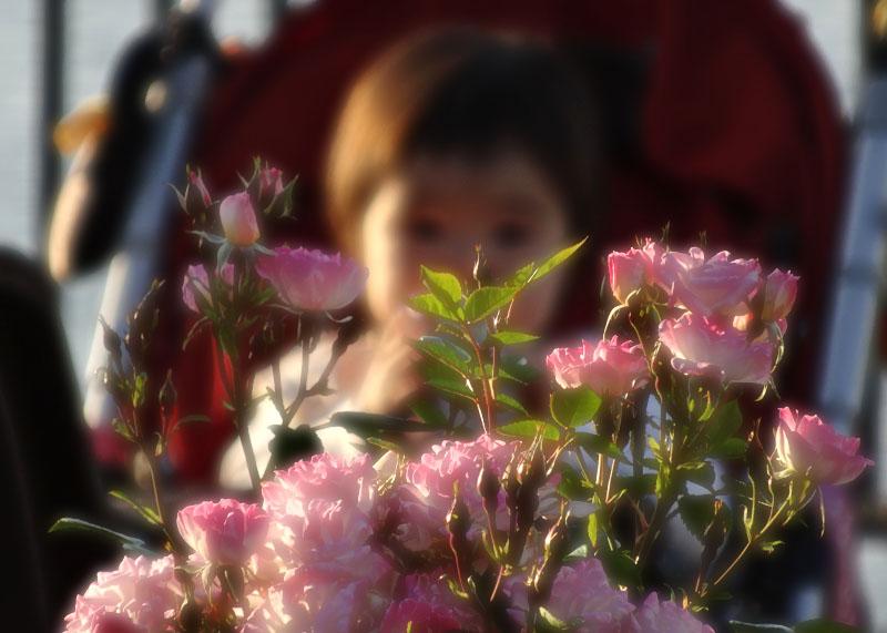 140518薔薇と軍艦@ヴェルニー公園5