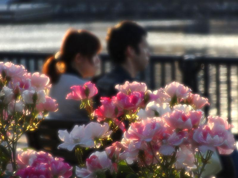 140518薔薇と軍艦@ヴェルニー公園2