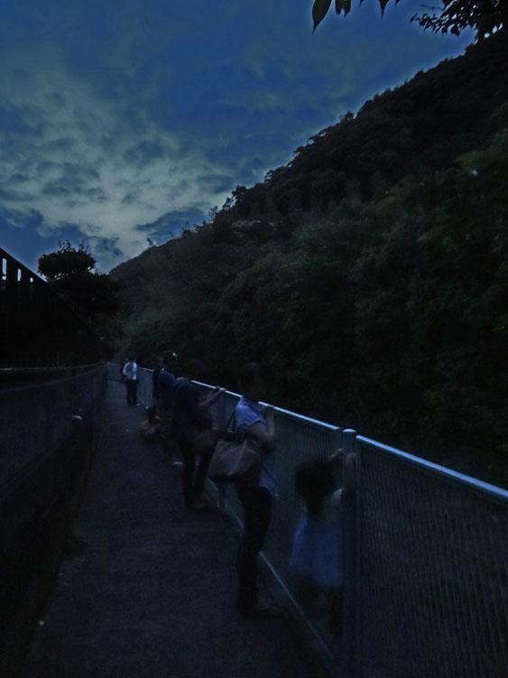 140609逗子田越川ホタル1