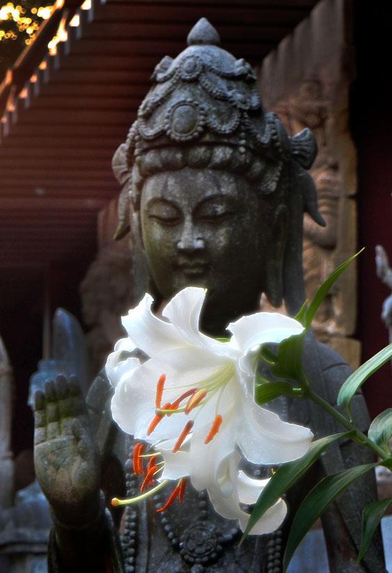 140721百合の花と観音