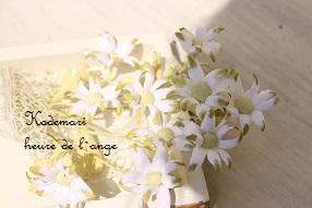 布花 フランネルフラワー