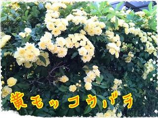 2014-04-25-21-25-11_deco.jpg