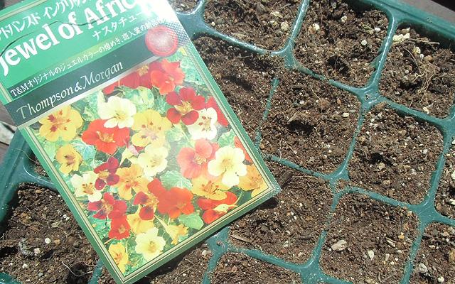 ナスタチウムの種蒔き