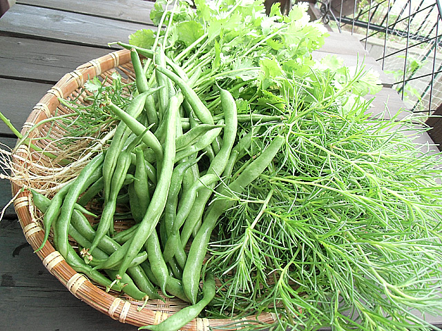 6月21日の収穫