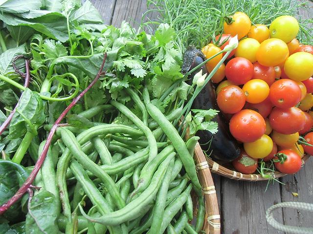 7月12日の収穫