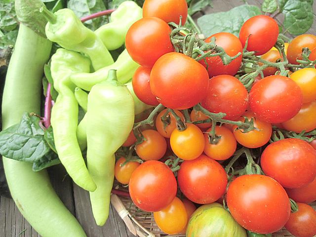 実物の収穫