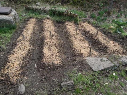 ベビーリーフの種蒔き H26